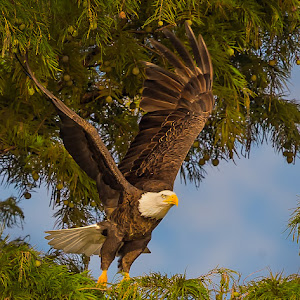 Leaving-the-Cypress-Nest-Tree.jpg