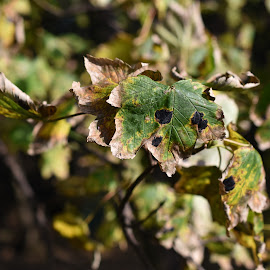 Autumn by Eloise Rawling - Nature Up Close Leaves & Grasses ( autumn leaves, autumn, trees )
