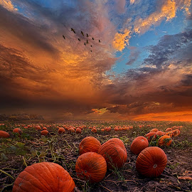In Search Of The Great Pumpkin by Phil Koch - Landscapes Prairies, Meadows & Fields ( vertical, arts, fine art, travel, yellow, love, sky, autumn, weather, light, u  nity, orange, trending, pumpkin, colors, twilight, art, mood, journey, horizon, rural, portrait, country, dawn, environment, season, horiz  ons, serene, popular, outdoors, lines, natural, hope, inspirational, canon, wisconsin, ray, joy, sunse  t, landscape, sun, photography, life, emotions, dramatic, horizons, inspired, clouds, office, heaven, camera, beautiful, scenic, living, morning, field, natu  re, blue, fall, peace, meadow, summer, beam, sunrise, earth )