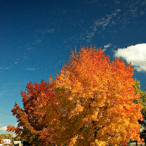 Autumn colors by Chris Taylor - Nature Up Close Trees & Bushes ( neighborhoods, sky, autumn, foliage, street, fall, trees, autumn colors )