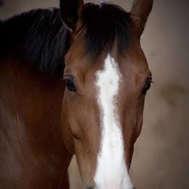 Horse by Aleksander Cierpisz - Animals Horses