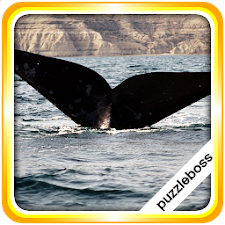 Jigsaw Puzzles: Whales
