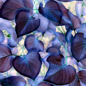 Red Bud Leaves - IA Blue by Tina Dare - Nature Up Close Leaves & Grasses ( abstract, up close, macro, ia, nature, redbud, blue, inverted, leaves, close up,  )