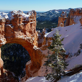 Bryce Snowy Arch by Kristen Colvell - Landscapes Caves & Formations ( arch, bryce, snowy, canyon, red rocks, rocks,  )