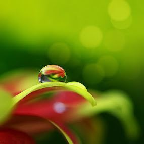 Spiritual Energy by Diens Silver - Nature Up Close Flowers - 2011-2013 ( macro, dew, green, waterdrops, bokeh )