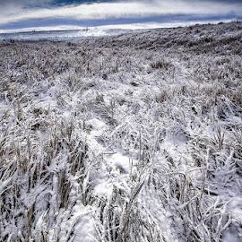 Frozen field by Zoran Mrdjanov - City,  Street & Park  City Parks