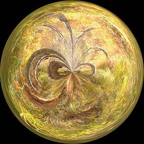 Fairy Orb by Gabrielle Libby - Abstract Fine Art ( birch, orb, maine, green, acadia, trees )