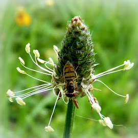 Bug on Flower by Amanda Pietrangelo - Animals Insects & Spiders ( funky, green, white, bug, flower )