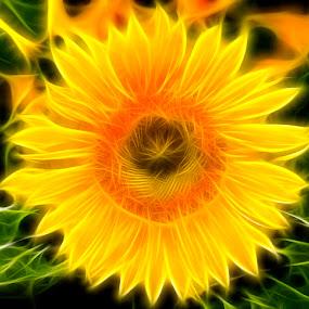 Fractal Flower by Christian Skilbeck - Abstract Light Painting ( nature, flora, sunflower, flower )