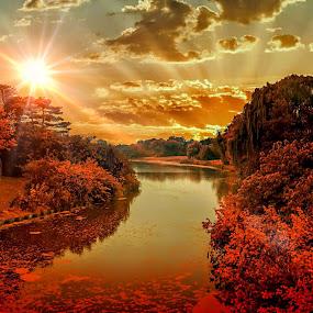 Sunset by Gene Brumer - Landscapes Sunsets & Sunrises ( reflection, sunset, trees, pond, watet, sun )