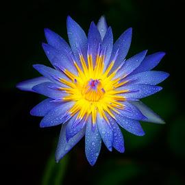 by Ronaldo Edson Reyes - Flowers Single Flower