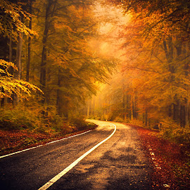 Return to Never Land by Dobre Cezar - Landscapes Forests ( fantasy, nature, fall, forest, road )