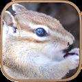 Free かわいいリス育成ゲーム - 完全無料!癒しのりす育成アプリ APK for Windows 8