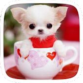 Cup Puppy Doggy APK for Bluestacks
