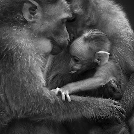 Love & Care by Praveen Premkumar - Black & White Animals ( pride, love, life, nature, care, wildlife )
