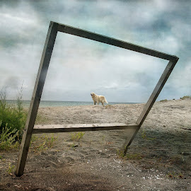 Click - to frame! by Илияна Лазарова - Animals - Dogs Playing ( dogs, golden retrievers, summer, sea, beach, dog )