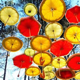 Spring umbrellas by Hristo Hristov - Food & Drink Fruits & Vegetables ( orange, lemon, red rose, yellow, colored )