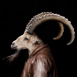 Gerry the Goat by Michal Challa Viljoen - Digital Art Animals ( jacket, zoo, goat, advertising, edit, brown, composite, photography, photoshop, animal,  )