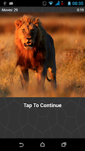 Lions Image Slide Puzzle - screenshot