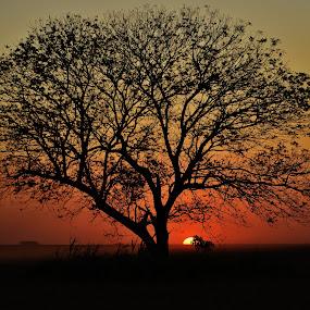 Itapura SP Brazil  by Marcello Toldi - Nature Up Close Trees & Bushes