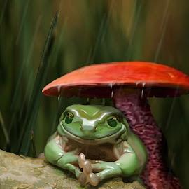 Umbrella by Charlie Alolkoy - Illustration Animals ( mushroom, grass, frog, log, rain )