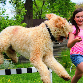 B & B 0.3 by Cecilia Sterling - Animals - Dogs Running ( girl, junior handler, goldendoodle, dog, agility )