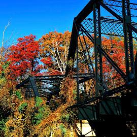 Arizona Avenue Trestle by Mark Richards - Buildings & Architecture Bridges & Suspended Structures ( autumn, trestle, train, washington dc, historic,  )