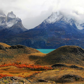 contemplation! by Itamar Campos - Landscapes Travel ( lake, lengas, nordenskjoldlake, paine massif, torres del paine national park )