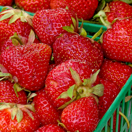 farm fresh strawberries by Lennie Locken - Food & Drink Ingredients
