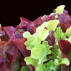 Lettuce 1 by RMC Rochester - Food & Drink Fruits & Vegetables ( macro, random, abstract, vegetables, lettuce, food, colors )