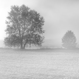 Dragon Hill Mist BW by Brian McDonald - Black & White Landscapes ( tree, mist )