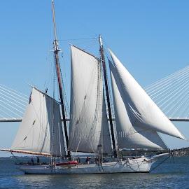 Spirit of South Carolina by Ron Malec - Transportation Boats (  )
