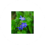 ImageViewer for Android Wear Icon