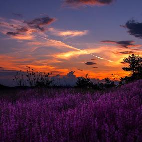 by Estislav Ploshtakov - Landscapes Prairies, Meadows & Fields ( landskape, purple, blue,  )