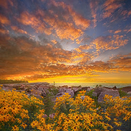 I Will Be Here When The Morning Comes by Phil Koch - Landscapes Sunsets & Sunrises ( trending, country, shadow, rural, office, scenic, hope, canon, beautiful, pastel, weather, season, sky, emotions, natural, journey, inspired, heaven, morning, field, light, peace, shadows, dawn, photography, love, sunrise, mood, vertical, endless, clouds, fineart, sun, life, colors, summer, unity, joy, lines, popular, arts, meadow, wisconsin, art, daisies, living, green, nature, inspirational, dramatic, portrait, horizons, horizon, environment, sunlight, outdoors, blue, sunset, earth, travel, serene, landscape,  )