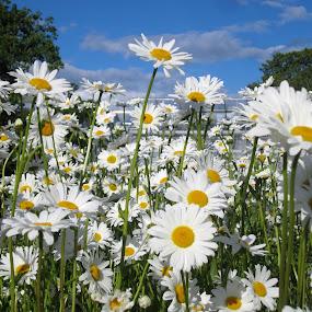 Rosendal by Viive Selg - Flowers Flower Gardens ( , #GARYFONGDRAMATICLIGHT, #WTFBOBDAVIS )