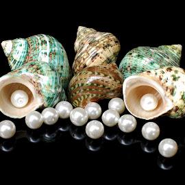 hermit by Adjie Tjokrosoedarmo - Artistic Objects Still Life ( pearls, hermit crab, sea, beach, seashells )