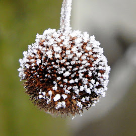 beads with frost by Dubravka Penzić - Nature Up Close Gardens & Produce (  )