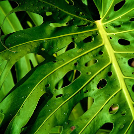 Green Plant by Matt Perkins - Nature Up Close Leaves & Grasses ( imagebrief )