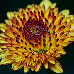 by SweeMing YOUNG - Nature Up Close Flowers - 2011-2013