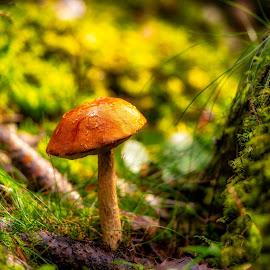 Crocked by Dan Westtorp - Nature Up Close Mushrooms & Fungi