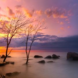 A very good morning by Sushmita Sadhukhan - Landscapes Sunsets & Sunrises ( tree, morning glory, cloud, sunrise, bolder )