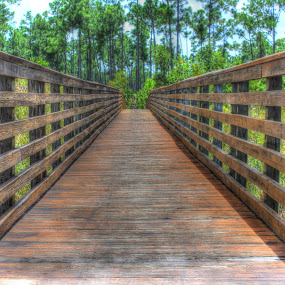 Boardwalk by Peg Elmore - Nature Up Close Trees & Bushes ( trees, boardwalk )