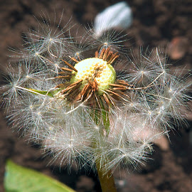 weed seeds by LADOCKi Elvira - Nature Up Close Gardens & Produce