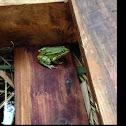 waterfrog