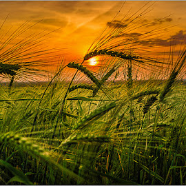 untitled by Dragan Milovanovic - Landscapes Sunsets & Sunrises (  )