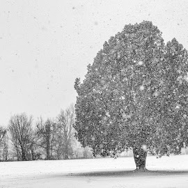Winter Coat by Caleb Daugherty - Landscapes Weather