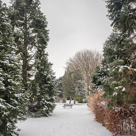 Heavitree Park, Exeter by Wendy Richards - City,  Street & Park  City Parks ( heavitree, park, snow, trees, exeter )