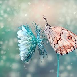 Happy new year by Mustafa Öztürk - Animals Insects & Spiders
