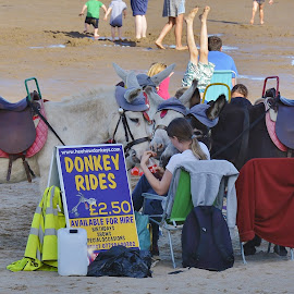 Donkey rides on the beach  by Eloise Rawling - Landscapes Beaches ( sand, donkey, sea, beach )